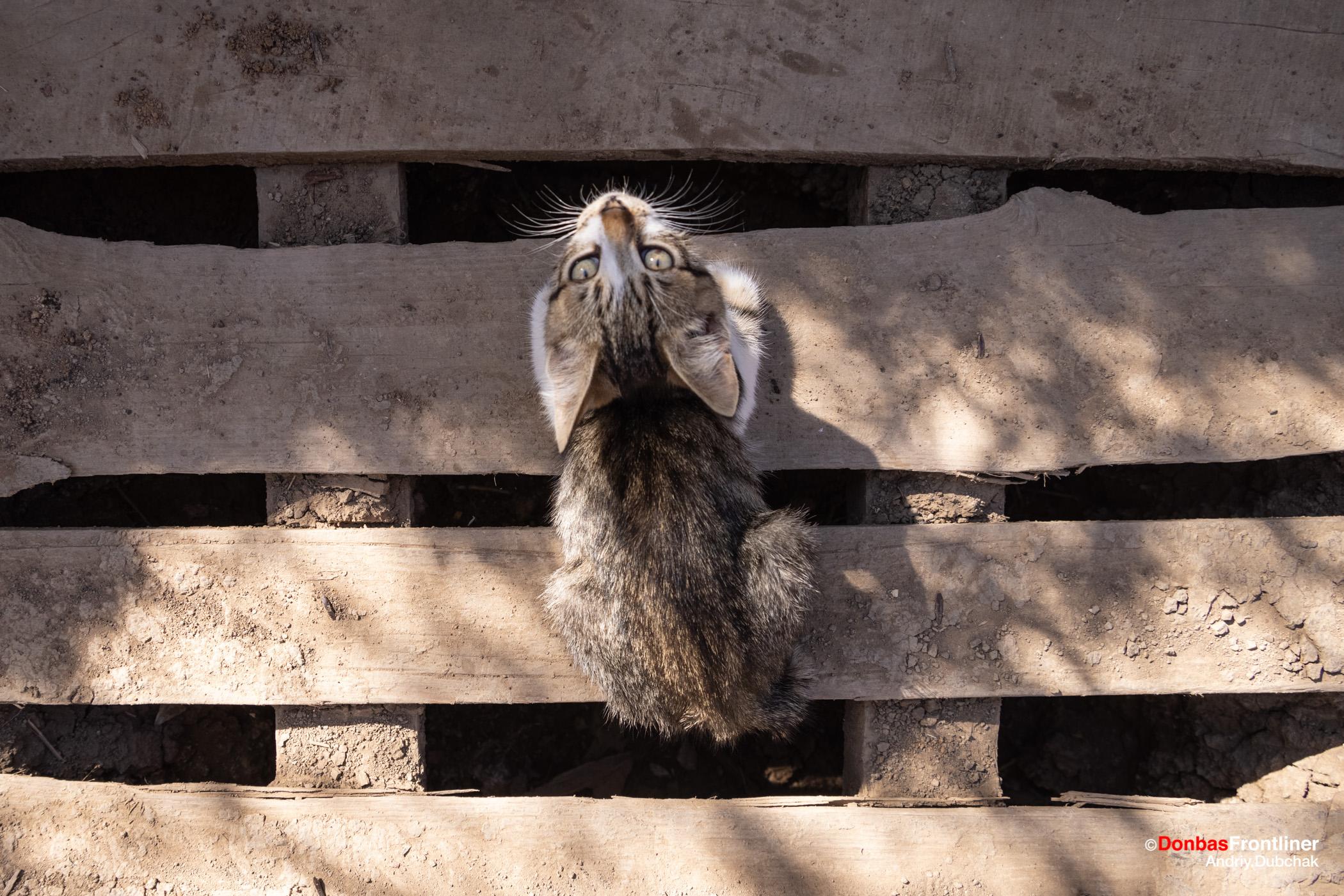 Кіт у оркопі української лінії фронту